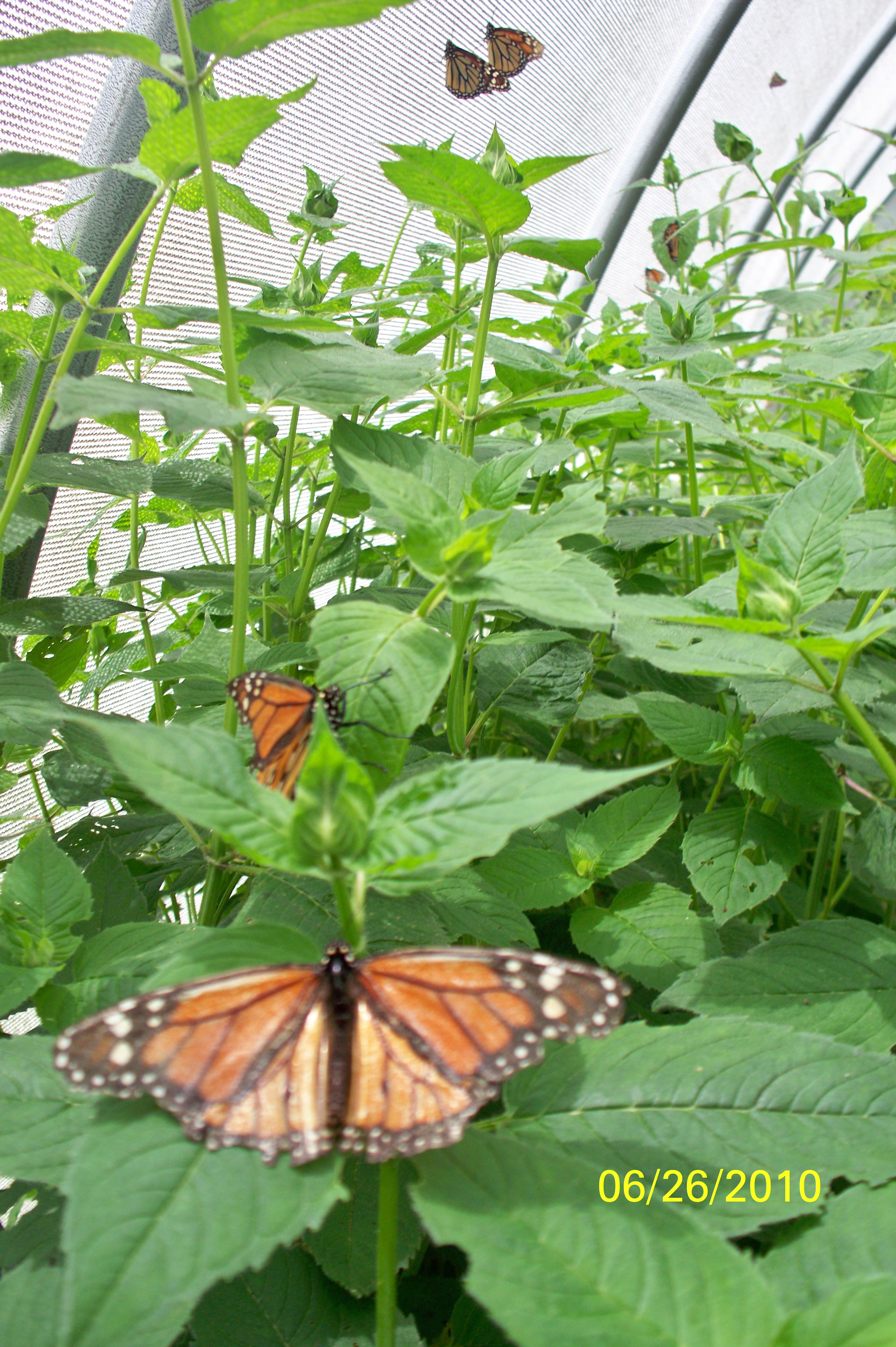 Rainbows End Butterfly Farm Pawling Ny Adventures Around Putnam Fence 16 2 New